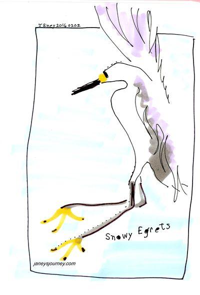 Snowy egret168
