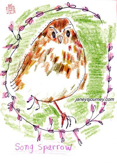 Song sparrow172