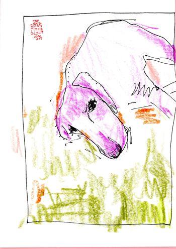 Doggie Days040
