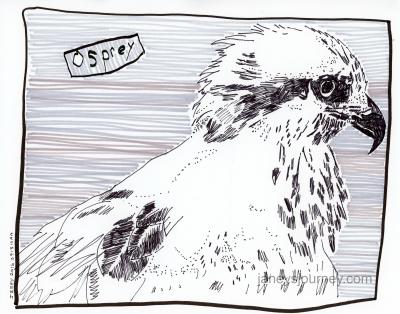 Osprey084