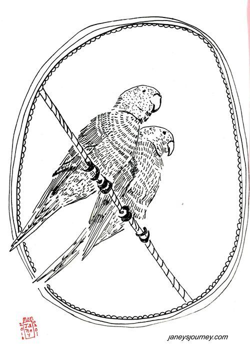 Green parrots165